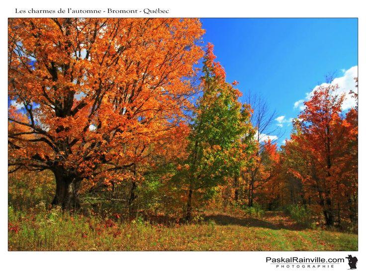 Les charmes de l'automne Prise près de Bromont, Québec, Canada http://www.paskalrainville.com/