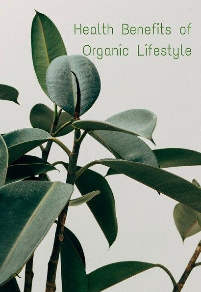 When you type in the word organic into your search box the first set of synonyms that come up includes such words as pesticide-free, additive-free, chemical-free, non-chemical, natural. There is no…