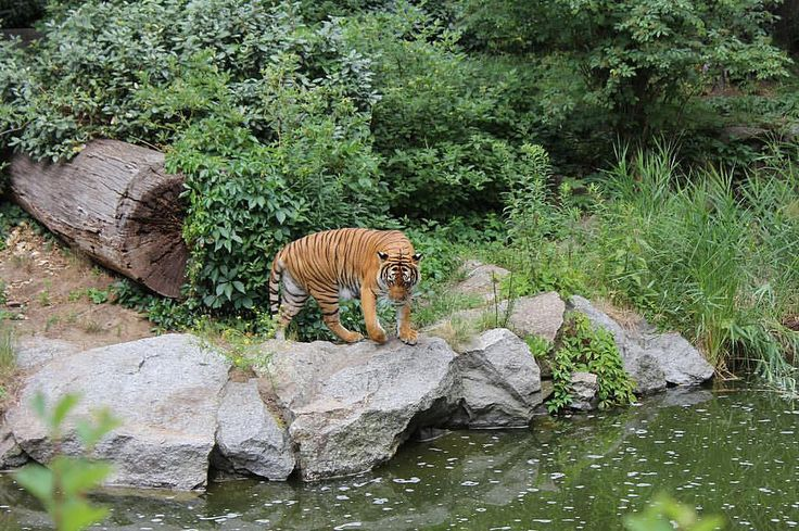 "The Berlin Zoological Garden- Germany 2011 🐅 ""Zoologischer Garten Berlin opened in 1884"" #berlin #zoologischergarten #germany #tyskland #tb🔙 #trip✈️ #europetrip #interrail #interrail2011🚂🌍 #vacation #holid"