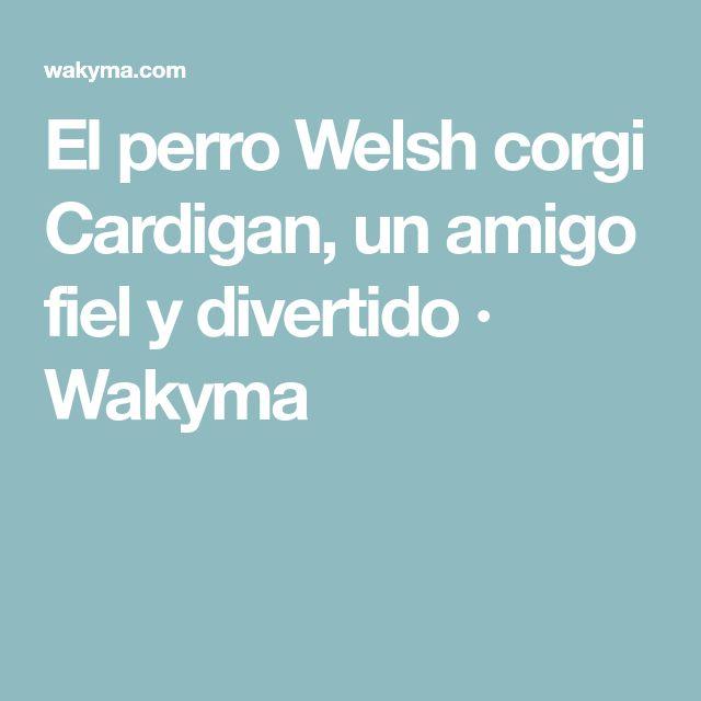 El perro Welsh corgi Cardigan, un amigo fiel y divertido · Wakyma