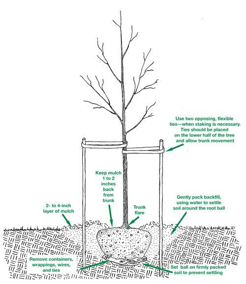 Fall is for tree planting