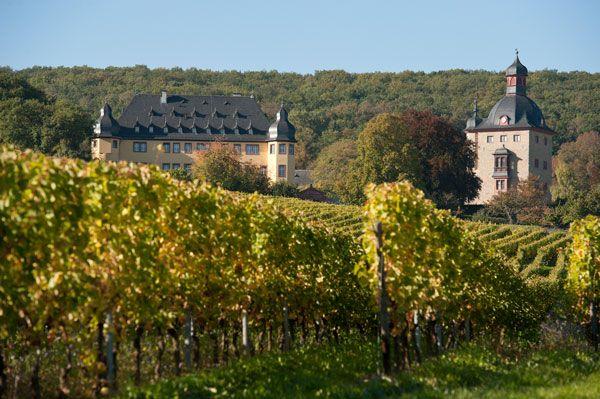 Schloss Vollrads   Rheingau - Urlaub in der Weinregion