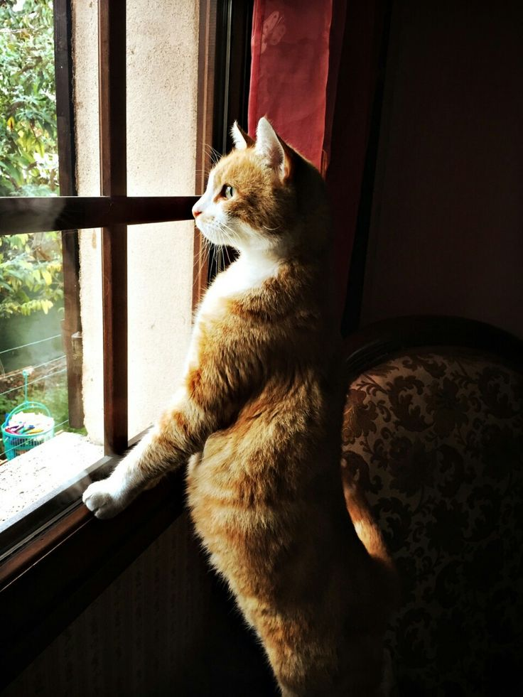 theluneis: Sir cat waiting at the window. (Credit...