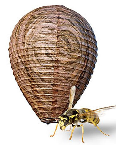 Natural Wasp Deterrent, Set of 2 : Said to keep most types of bees away!
