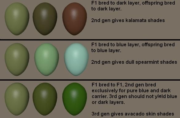 Easter Egger Egg Color Chart | Possible breeding and color combinations for olive eggs.