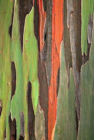 Arbres remarquables, plantes d'exception aix en provence