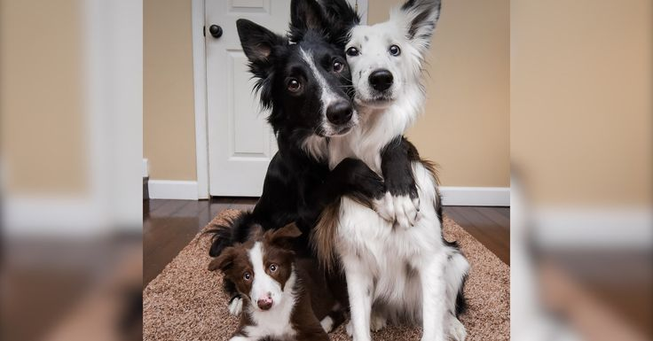 Hugging Rescue Dogs Get A New Puppy Brother These rescue dogs love to hug each other — and now they have a new little brother!