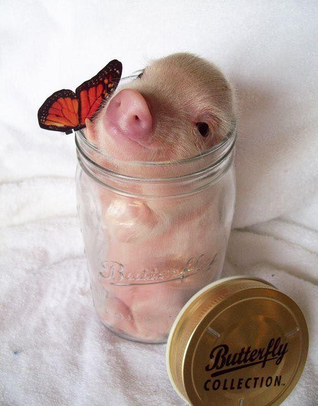 Cute lil piggie