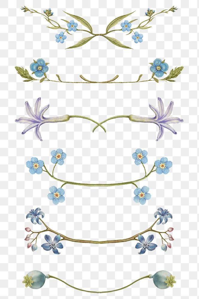 Floral Divider Png Remix From The Model Book Of Calligraphy Joris Hoefnagel And Georg Bocskay Free Image By Ra Vintage Illustration Free Illustrations Floral