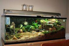 Le paludarium, c'est quoi ? Un paludarium, c'est pas bien compliqué, c'est l'association d'un aquarium et d'un terrarium! Scientifiquement parlant, c'est la reconstitution d'un biotope aquatique comprenant une partie immergée et une partie terrestre. Il représente donc la zone humide de transition entre la partie aquatique et terrestre d'un environnement. De ce fait, il est …