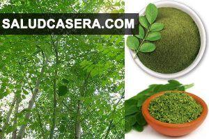 Moringa hierba anti diabetes y asesino natural contra c ncer alimentos superalimentos - Alimentos contra diabetes ...