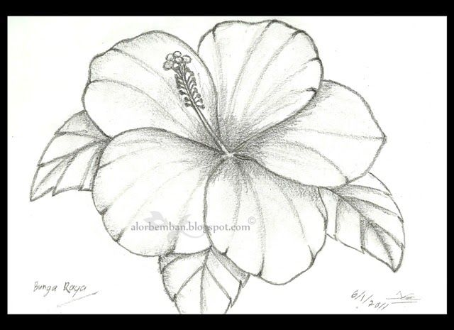 Gambar Bunga Raya Kartun Gambar Bunga Raya Lukisan Gambar Mno Bunga Raya Flower Vector Illustration Stock Vector Royalt Di 2020 Menggambar Bunga Lukisan Bunga Bunga