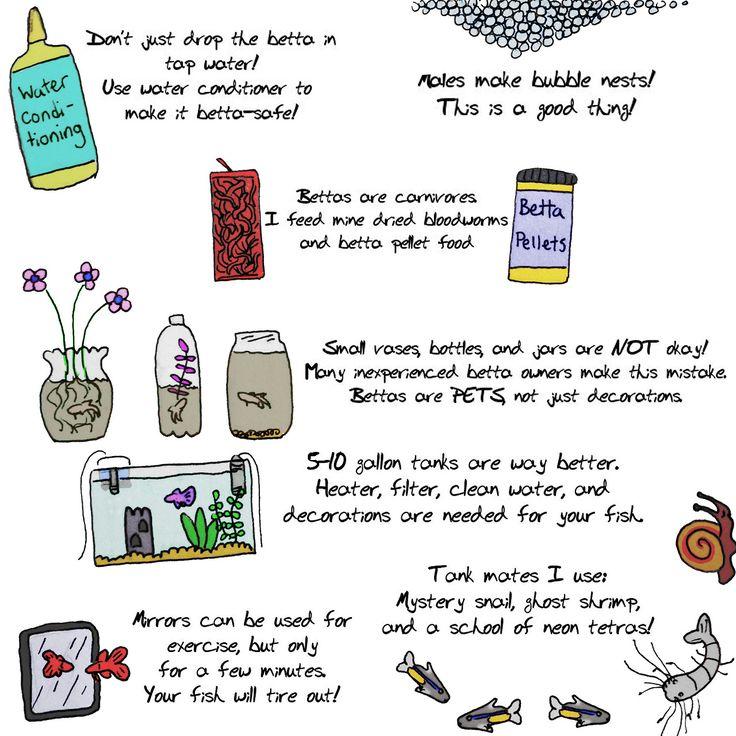 17 best ideas about betta fish care on pinterest betta for Betta fish mirror