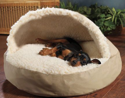 life with desmond how to fail at the cozy cave dog bed