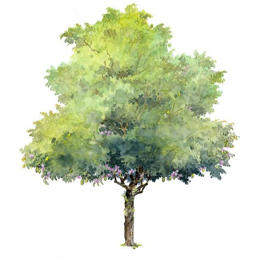 how to make a tree watercolour