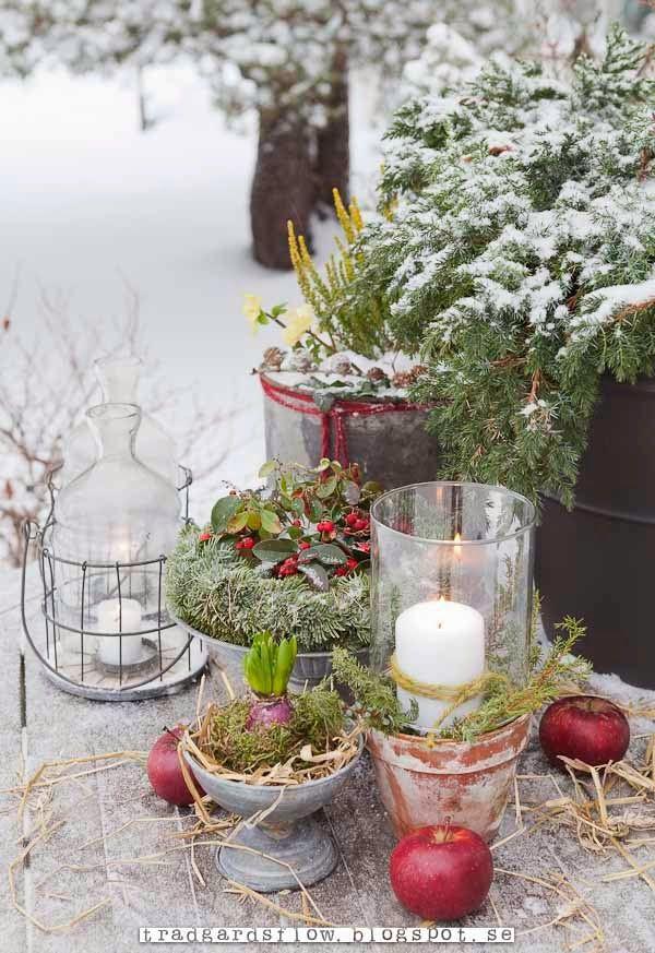 Trädgårdsflow: December