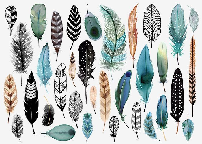 Image result for feathers