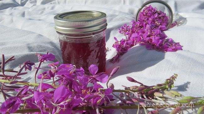 Foraging: How to Make Fireweed Jelly