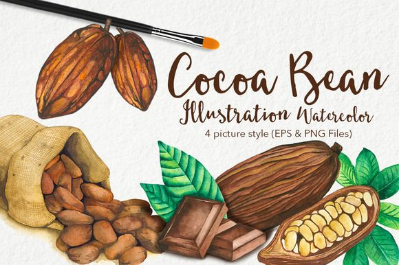 Cocoa Bean & Fruit Watercolor by andypray on @creativemarket