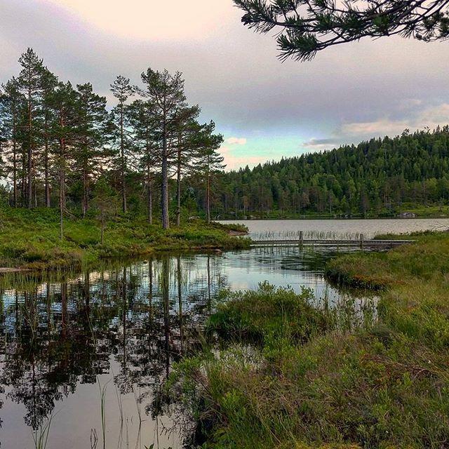 Ved Grestjønn.  #summer #happy_days #july #beautiful #outdoor #adventure #landscape #nature #trees #lake #fishing #footpath #walking #fishing #eating #living #loving #utpåtur #hyttetur #fisketur #nortrip #nordicnature #visitscandinavia #norway2day #norgesperler #southnorway2day #visitnorway #visittelemark #tbno