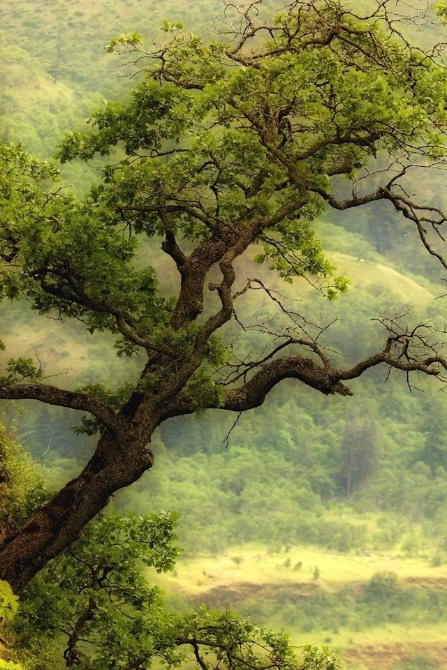 Green tree wallpaper beautiful green tree iphone hd - Family tree desktop wallpaper ...