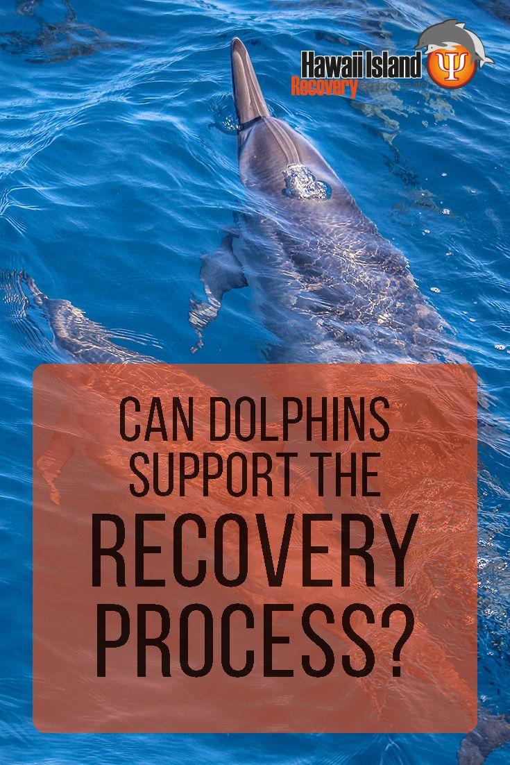 Dolphin skin