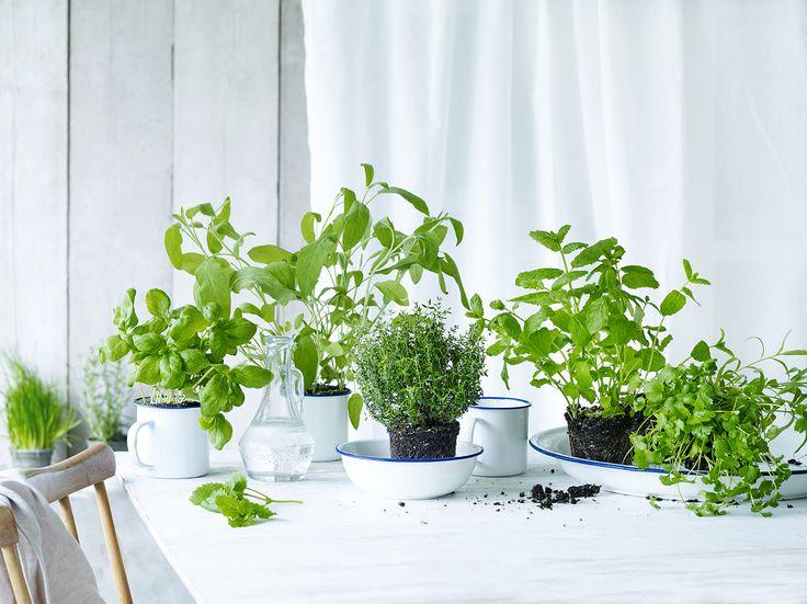 Verrijk je keuken met verse kruiden
