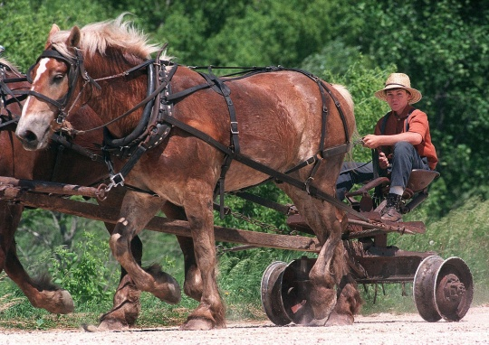 AmishAmish Farmers, Drive Horse'S Drawn, Farms Hors, Boys Drive, Farms Equipment, Draft Hors, Amish Lifestyle, Amish Boys, Amish Living