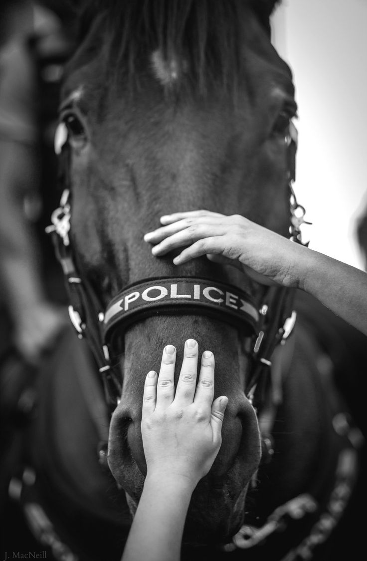 police Horses, Police, Military dogs
