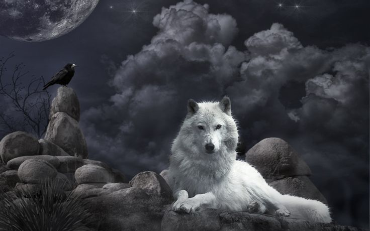Dark Ravens Background | Wallpaper White Wolf and raven in the night 1440x900. Wallpapers 3d ...