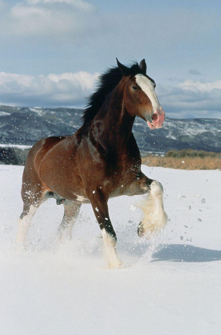 Christmas Clydesdale Horses Budweiser | horses Budweiser ...