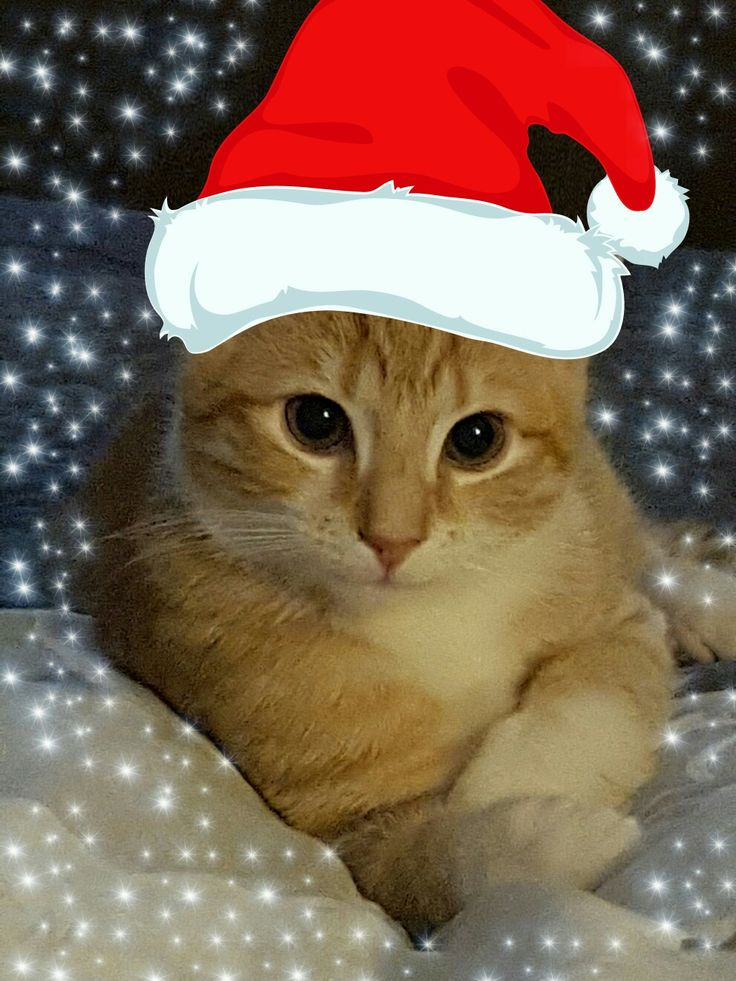 Christmas cat 🎅