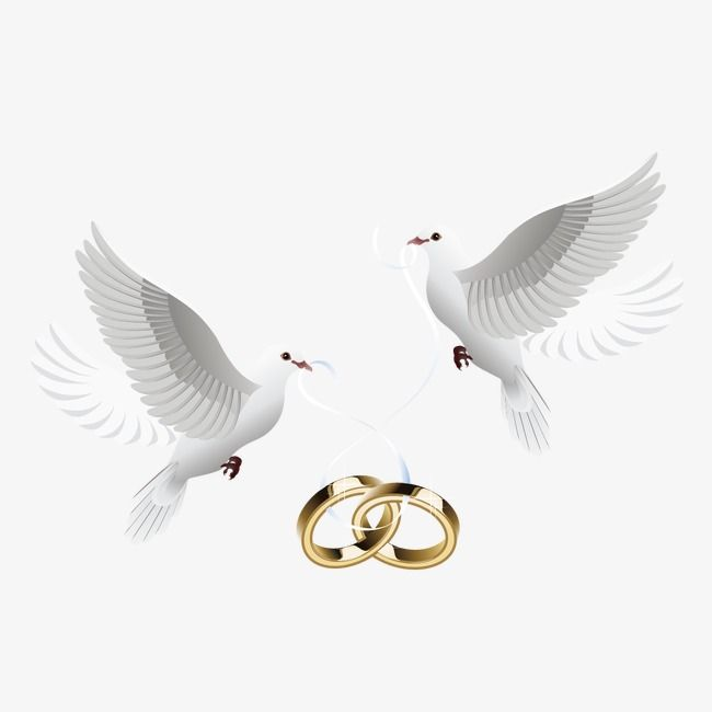 الحمام وخاتم حمامة حلقة حب Png وملف Psd للتحميل مجانا Love Birds Wedding Wedding Doves Wedding Frames