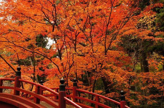 紅葉を見に、今すぐ高野山に行こう!   レンタルキャンピングカー和歌山【アップスレンタカー】