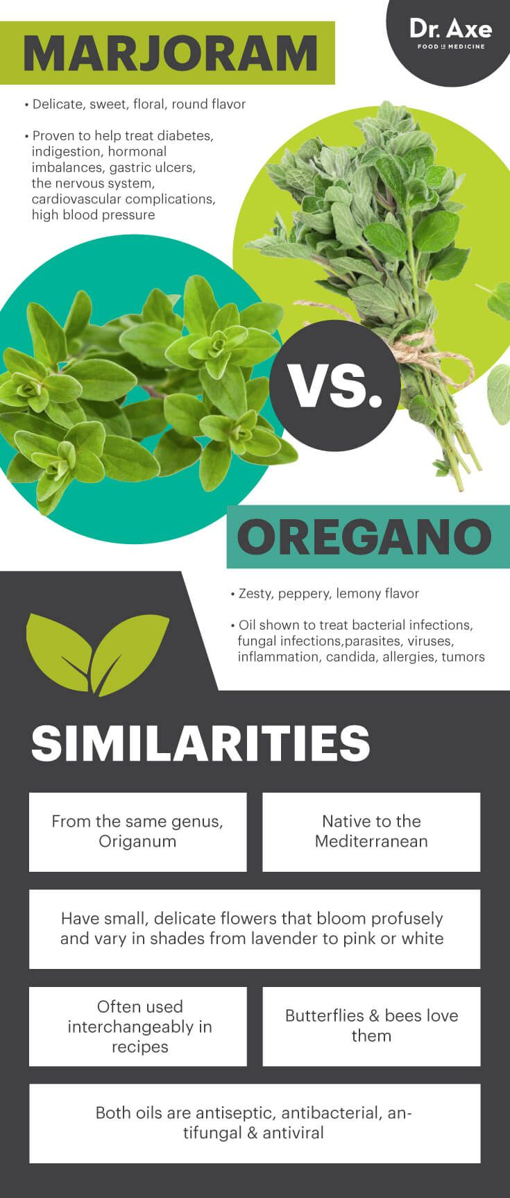 Marjoram vs. oregano - Dr. Axe http://www.draxe.com #health #holistic #natural