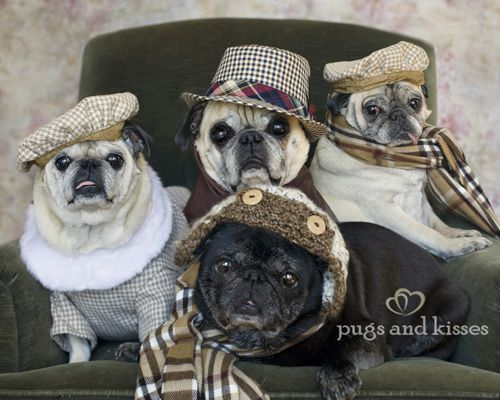 Pugs and Kisses bio picture  Website for pug love