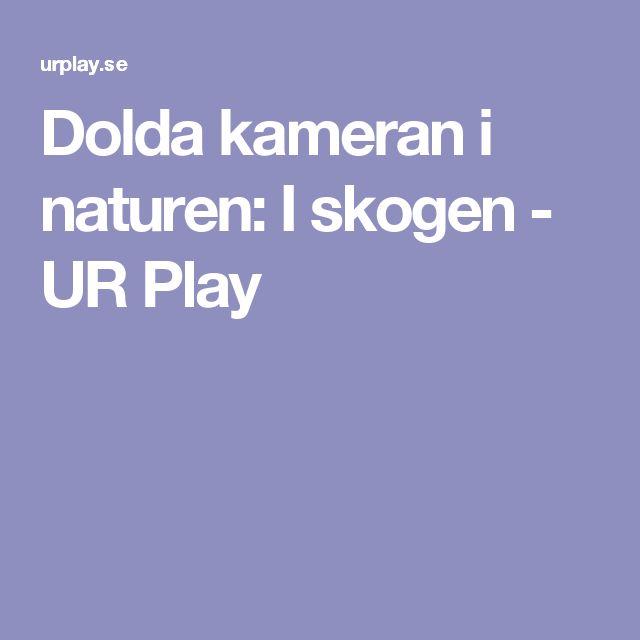 Dolda kameran i naturen: I skogen - UR Play