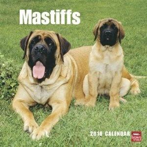 Mastiffs 2010 Square Wall (Multilingual Edition) (Calendar) www.amazon.com/...