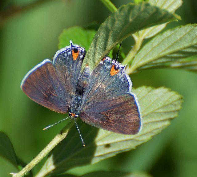 Gray Caterpillars That Are Big: 390 Best Butterflies, Butterfly, Caterpillars, WITH THEIR