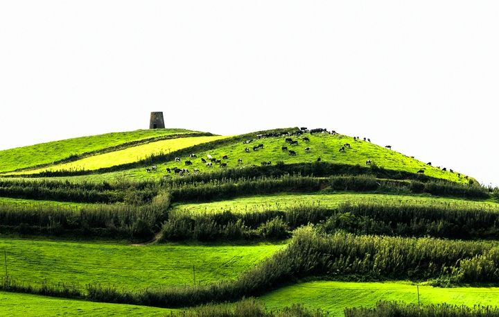 GREEN FIELDS OF AZORES