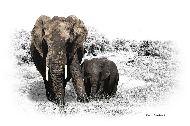 Elephant Mother & Calf | Canvas Print | Order online at ngunigalore.com - Delivery is FREE to anywhere in SA!