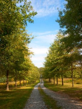 tree lined driveway design ideas pictures remodel and decor page 3 - Driveway Design Ideas