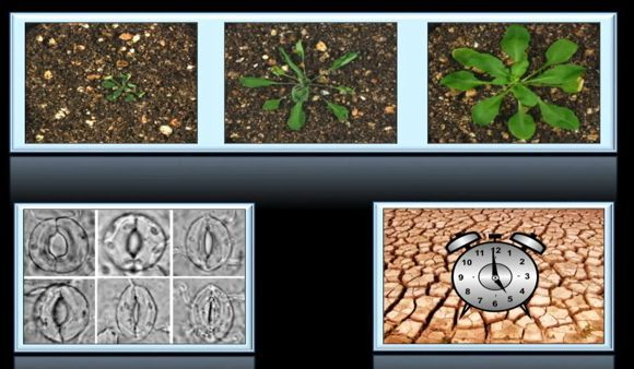 El reloj circadiano: las plantas siguen el ritmo Conferencia de Paloma Mas en @TEDxBarcelona