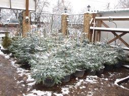 Контейнерные растения, купленные осенью, в сад! - Садоводка