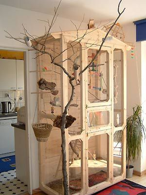 how to build an aviary for parakeets