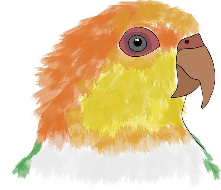 Caique   www.cs4rt.com  #caique #caicco #pionites #parrot #parrots #pappagallo #pappagalli #disegno #draw #drawing #grafca #graficadigitale #animal #animals
