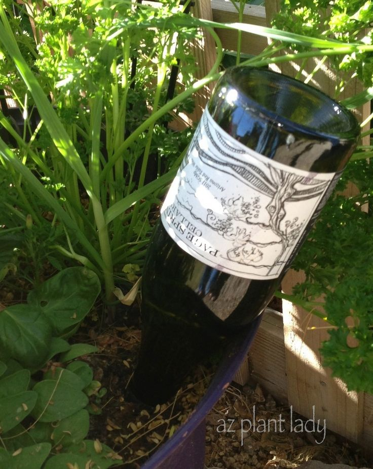 RAMBLINGS FROM A DESERT GARDEN....: Favorite DIY Posts - Day 7: Self-Watering Bottle For Containers