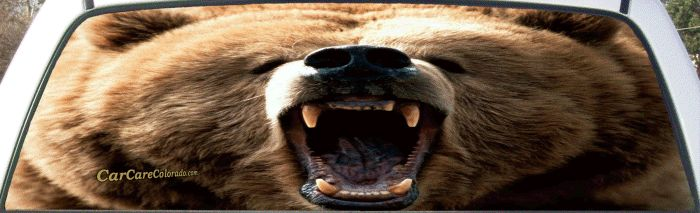 18 Best Wildlife Rear Window Graphic Murals Images On