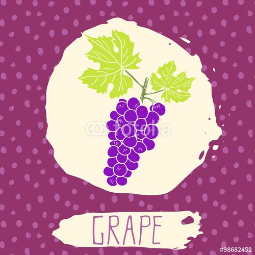 Vector: Grape hand drawn sketched fruit with leaf on background with dots pattern. Doodle vector grape for logo, label, brand identity