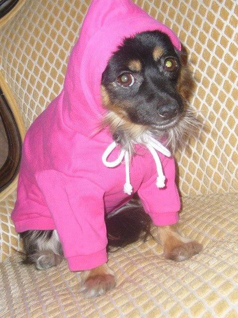 Lakshimi wearing her pink hoodie, blank 15 dollars - customized 20